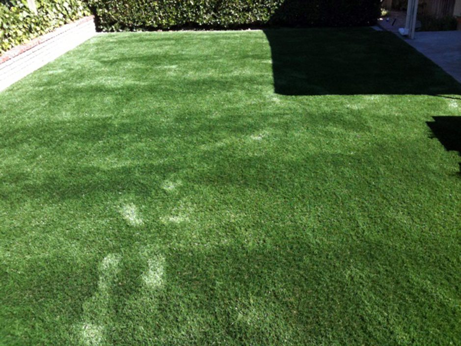 Artificial Turf Cost San Ramon California Hotel For Dogs