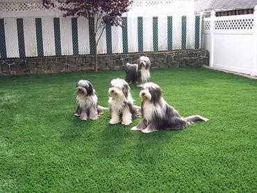 Artificial Grass Photos: Fake Turf Fishers, Indiana Pet Grass, Backyard Landscaping