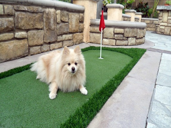 Artificial Grass Photos: Lawn Services Corvallis, Oregon Lawns,  Dog Kennels