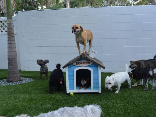 Artificial Grass Photos: Lawn Services Placentia, California Hotel For Dogs, Dogs