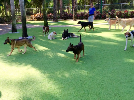 Synthetic Lawn Glendora, California Cat Grass, Dogs artificial grass