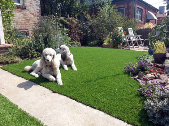 Artificial Grass Photos: Synthetic Lawn Schaumburg, Illinois Landscape Ideas,  Dog Kennels