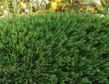 Haven-63 Synthetic Grass